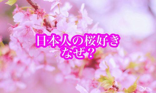 日本人の桜好き(花見)はなぜ?理由は